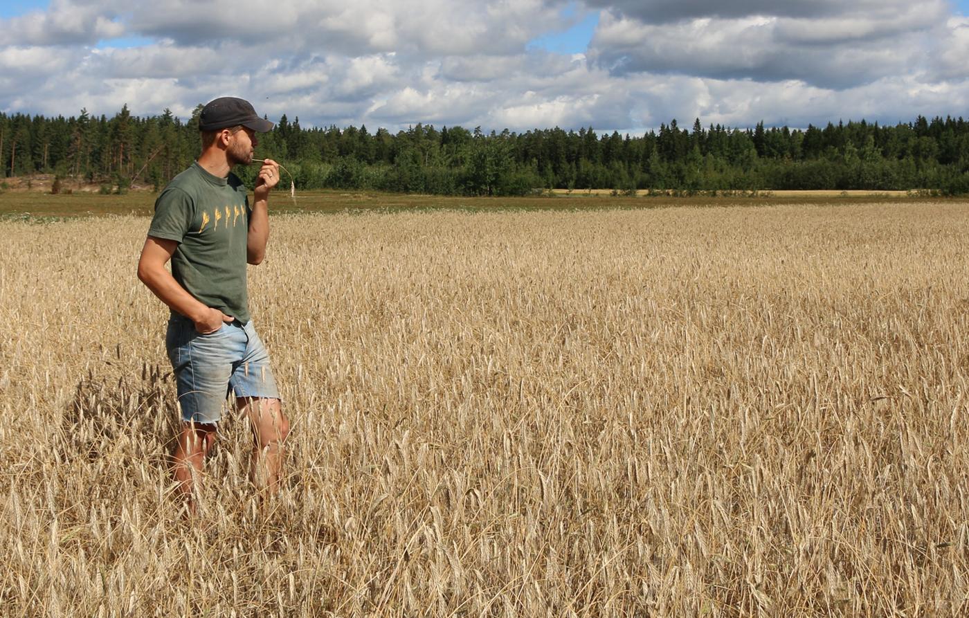 Työnäyte: Mies pellolla - MTK vaikuttavaa viestintää; visuaalinen ja graafinen suunnittelu
